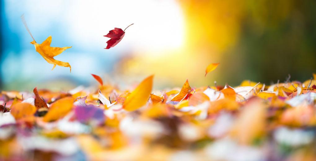 Осінь встеляє під ноги щастя багряне…
